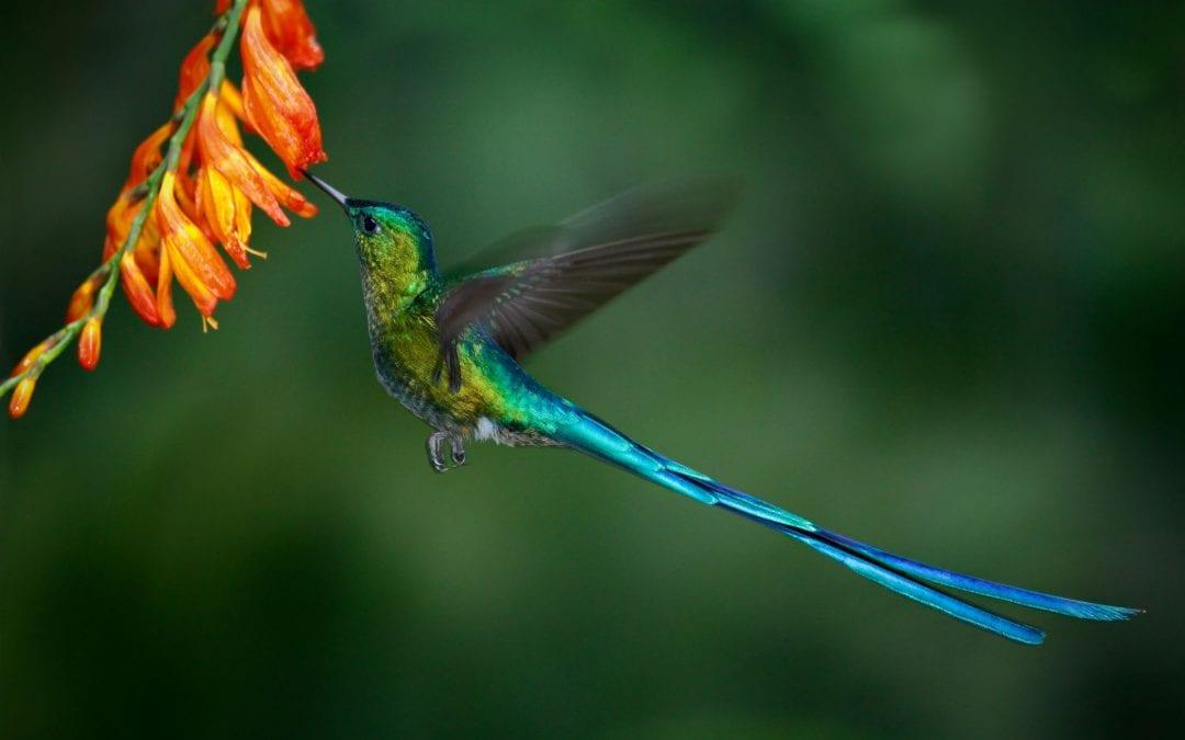 Pozycjonowanie long tail (długi ogon) – czym jest?